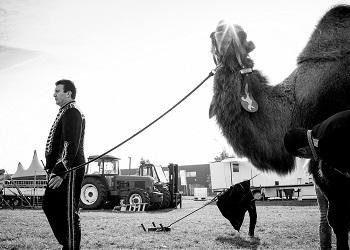 20161101-Leuven-Belgium                    Reportage tijdens een voorstelling over Richard Korittnig, tijdens een voorstelling van circus Barones